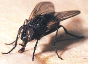 moscadomest[1]